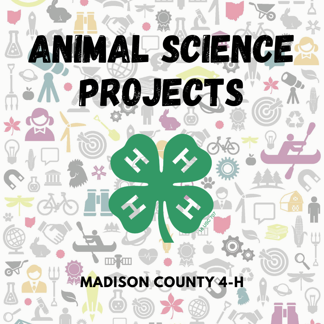 animal science projects